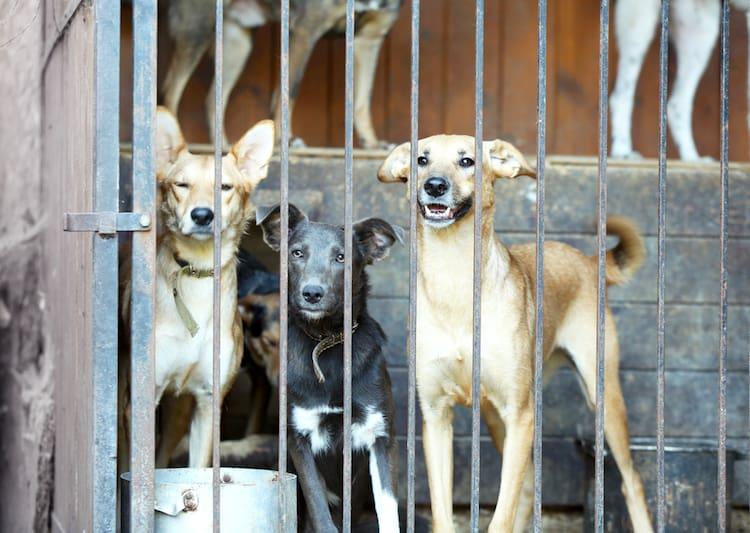 dog warehousing