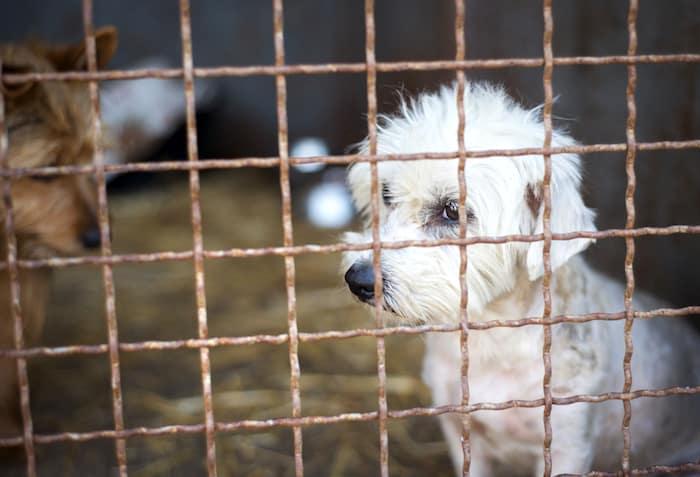 lonely sad shelter dog