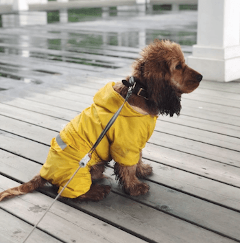 8 Best Dog Raincoats: Keeping Your Pooch Dry in Downpours