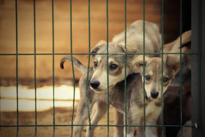 scared shelter dogs