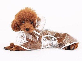 transparent-doggie-raincoat