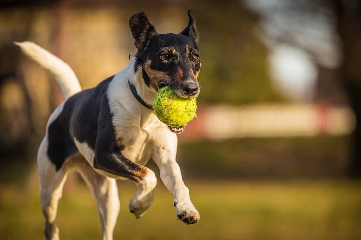 Are tennis balls good for dogs