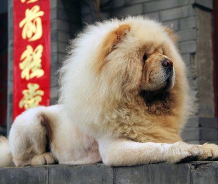 Chinese Dog Breeds
