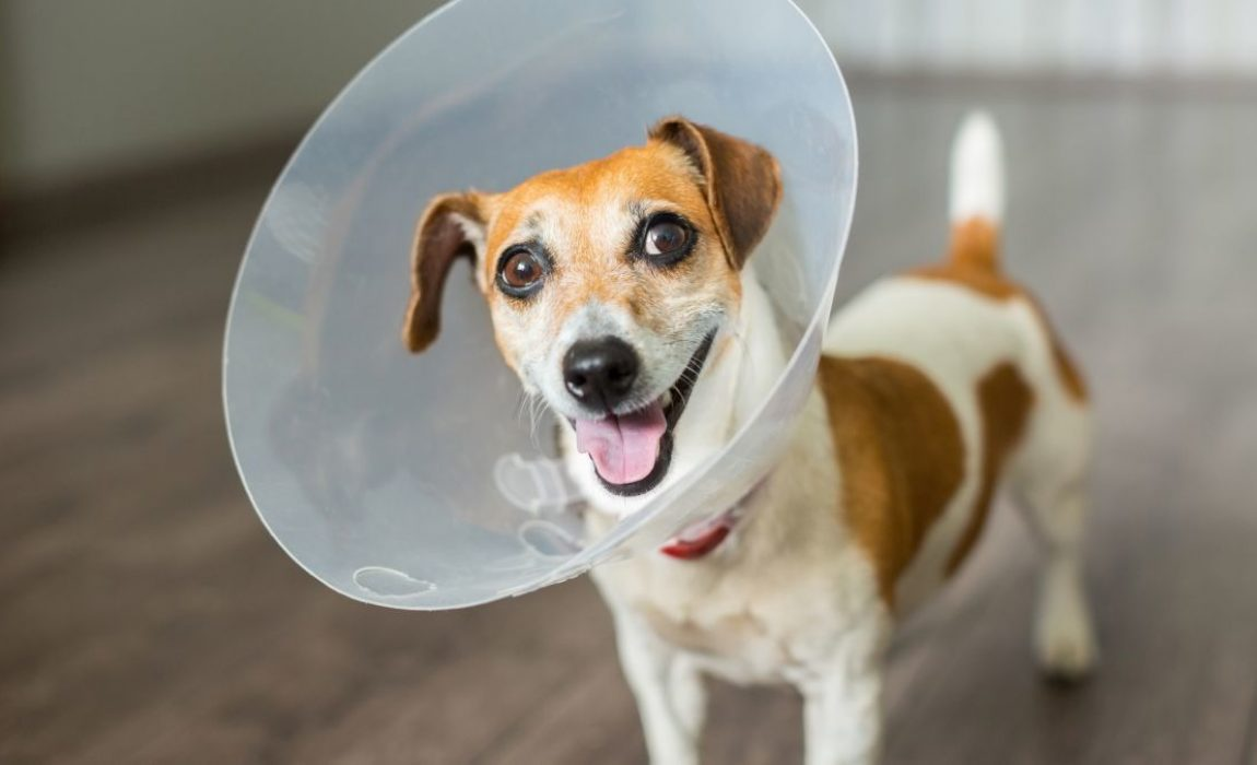 7 Diy Dog E Cones Seven E Collars You Can Make At Home