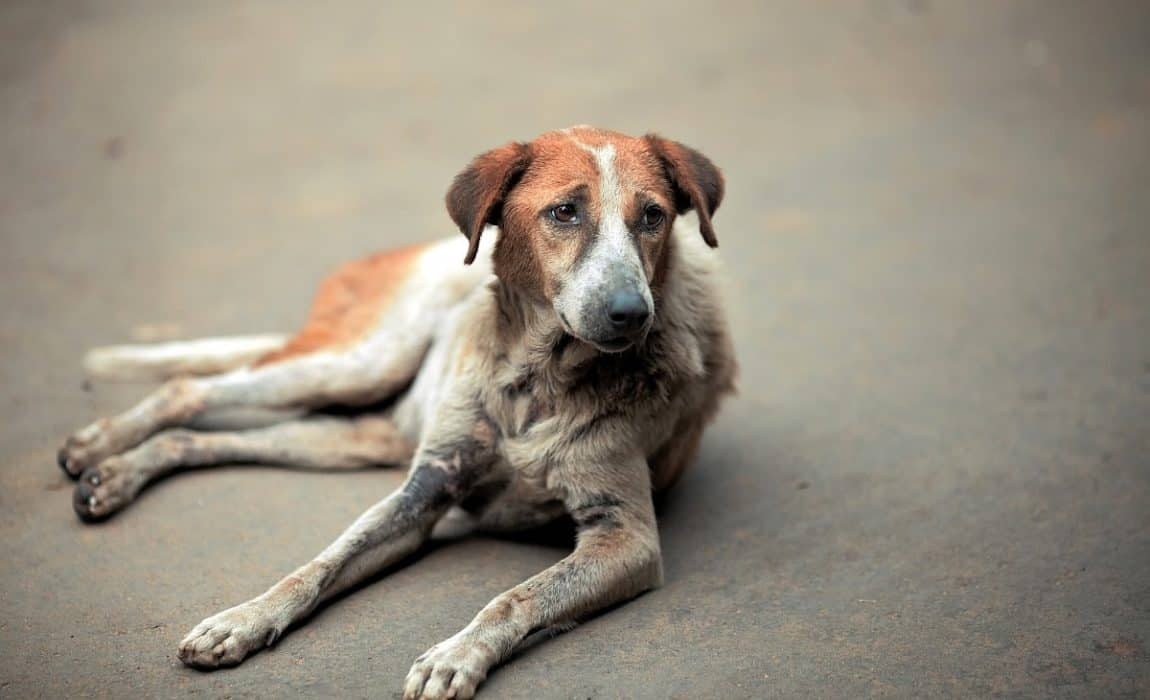 Dewormers for Dogs