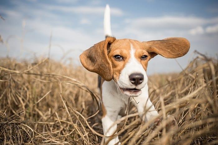 Good grain-free dog foods