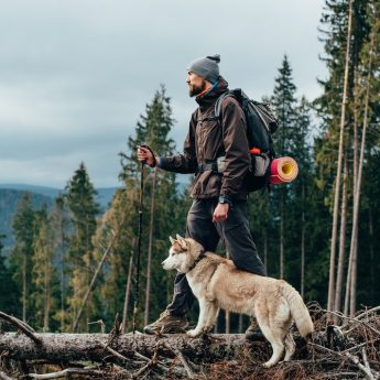 best-dog-harness-for-hiking