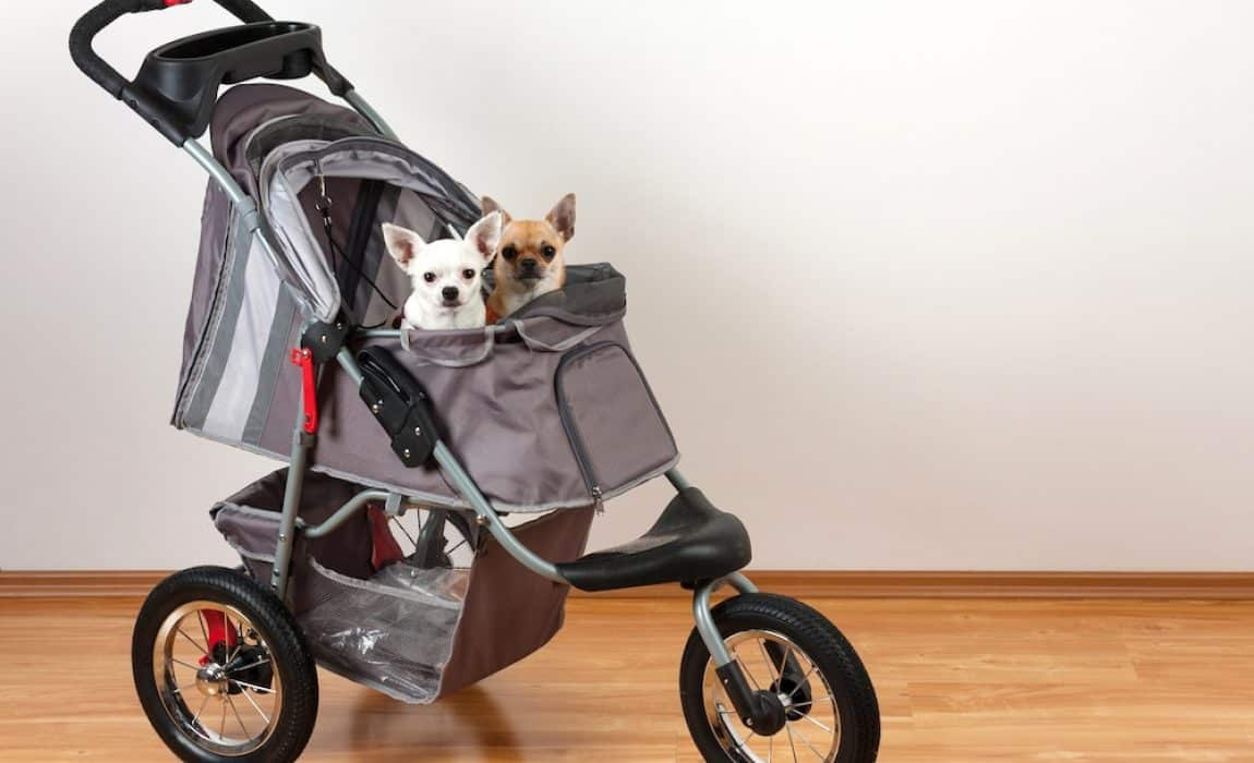 5 Best Dog Strollers [2020 Reviews]: Carting Your Canine On Wheels!