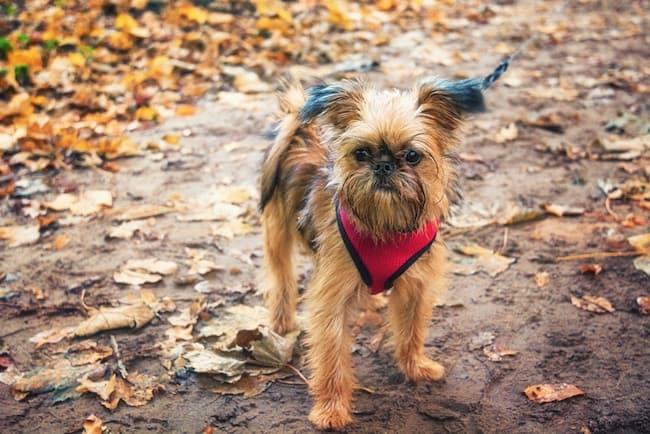 bright dog harness