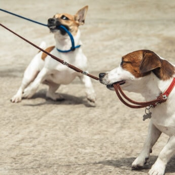 chewproof-dog-leash