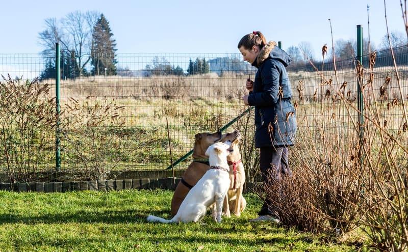 choosing dog trainer