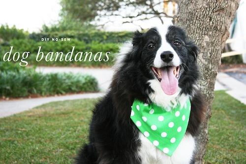 diy-dog-bandana-collar