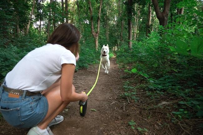 dog long leash
