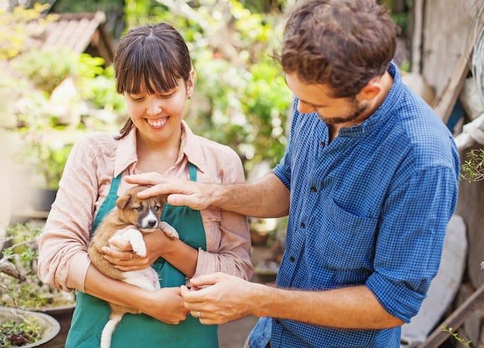 evaluating-animal-rescue