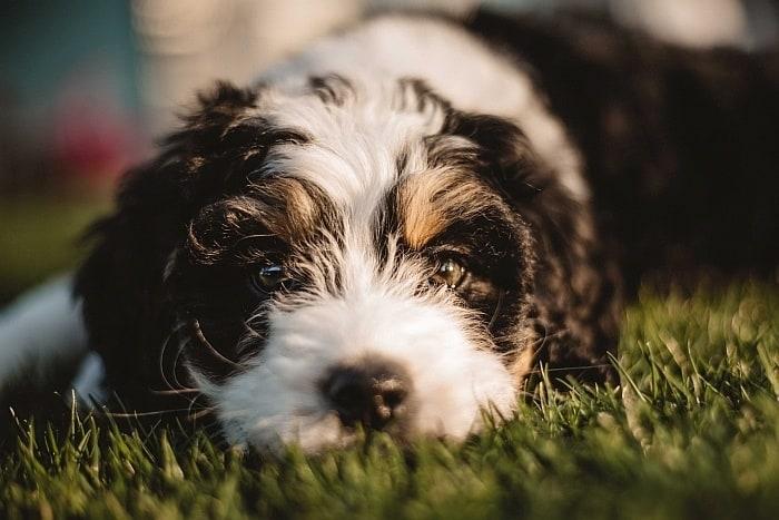 grain-free dog food recipe