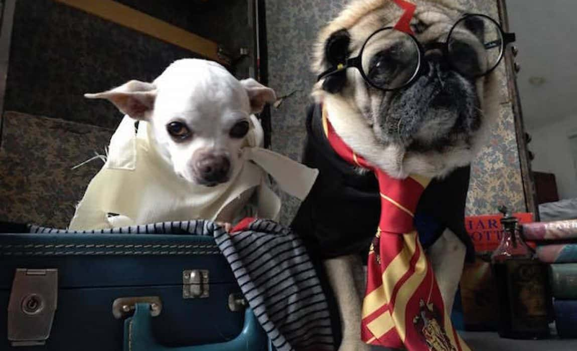 70 Harry Potter Dog Names Titles For Hogwarts Hounds