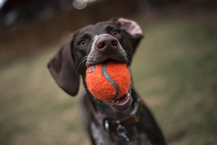 tennis balls for dogs