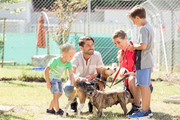 tips for adopting rescue dog
