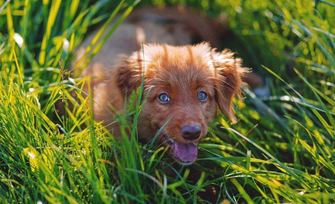 5 Best Grasses for Dog Owners: Crafting a Canine-Friendly Lawn!