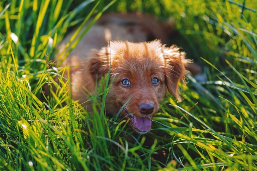 5 Best Grasses For Dog Owners Crafting A Canine Friendly Lawn