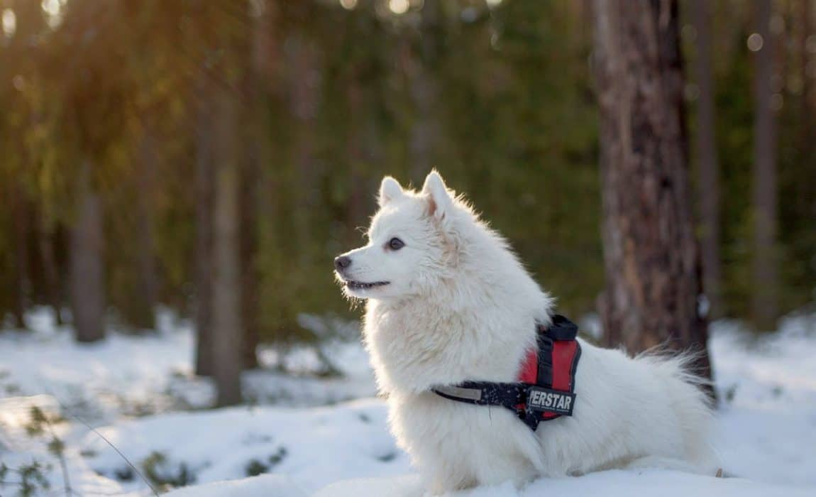 The Four Best Service Dog Vests For