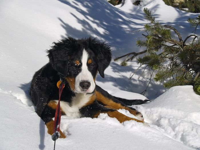 Dogs that Tolerate Cold Weather