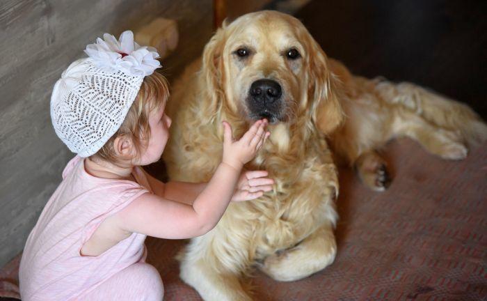 Golden Retriever for Autistic Children