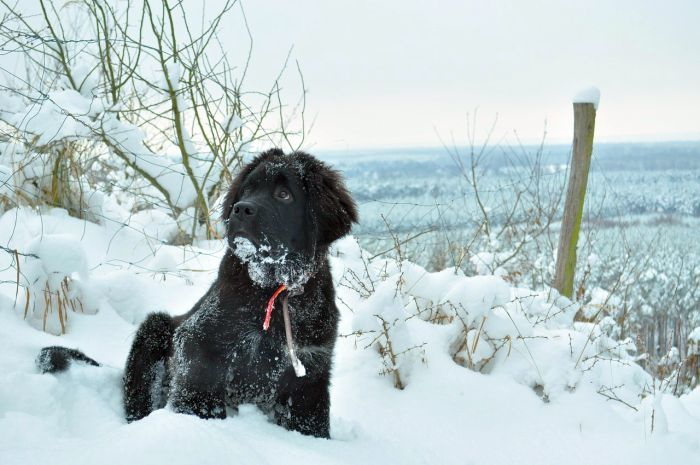 Good Dogs for Cold Climates