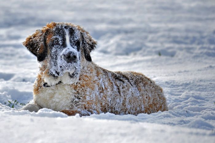 Snow Loving Dogs