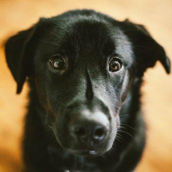 black-dog-names
