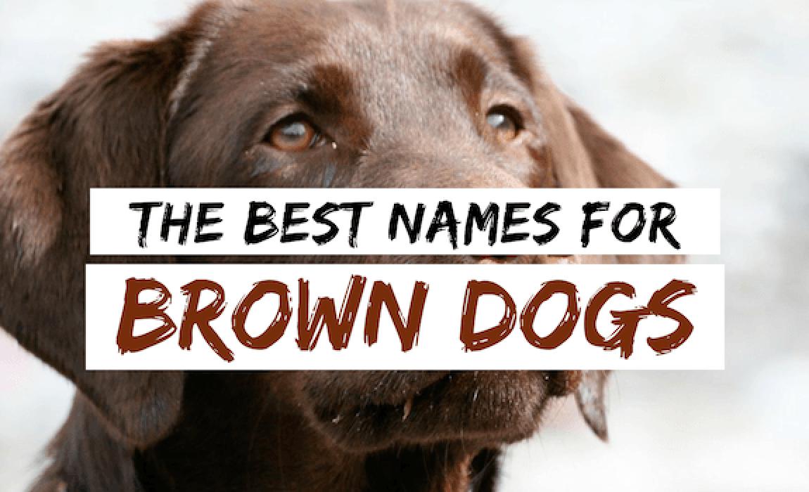 brown-dog-names