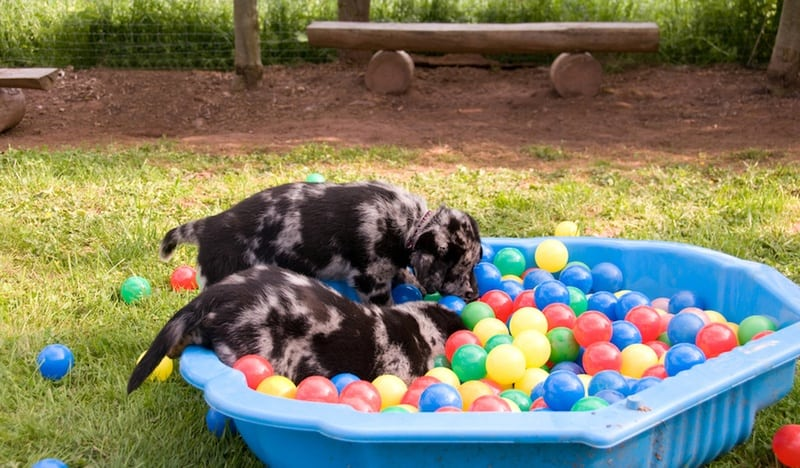 choosing doggie daycare