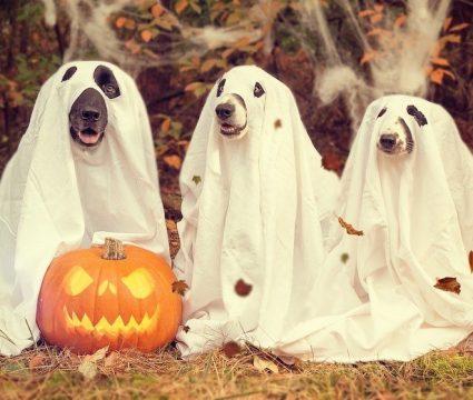 diy-dog-halloween-costumes