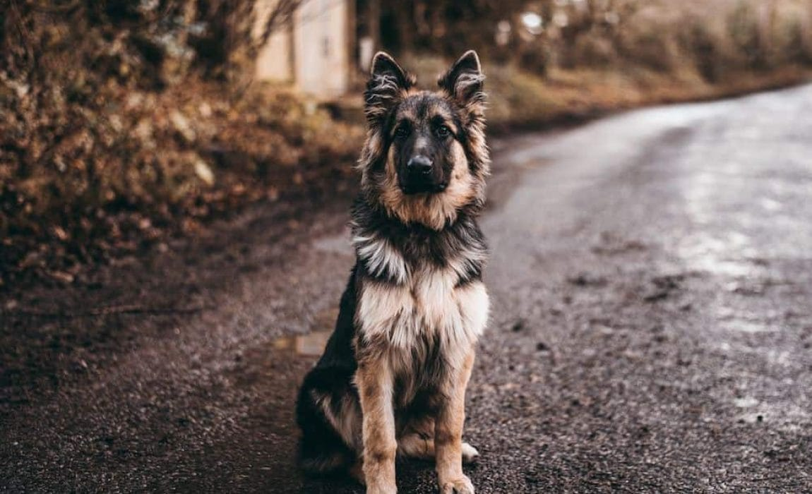 Dog Names That Mean Loyal: Naming Ideas For Your Pet!