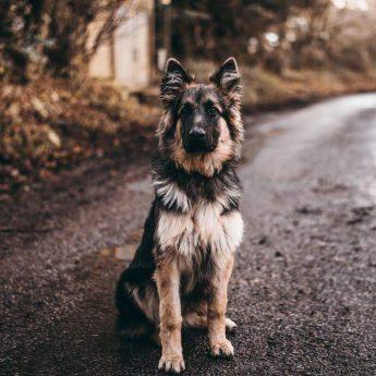 dog-names-that-mean-loyal