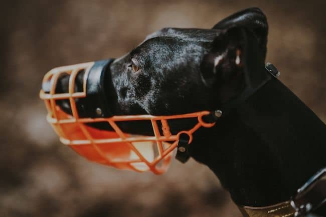 dog-with-muzzle