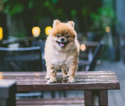 fluffy-dog-names