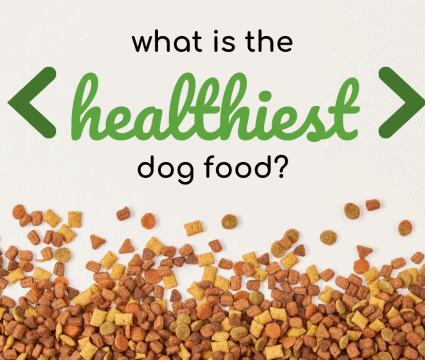 healthiest-dog-food