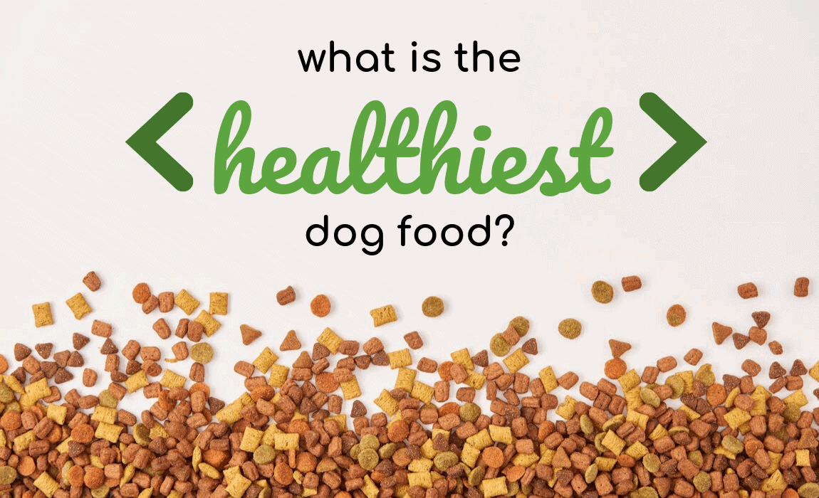 What Is The Healthiest Dog Food