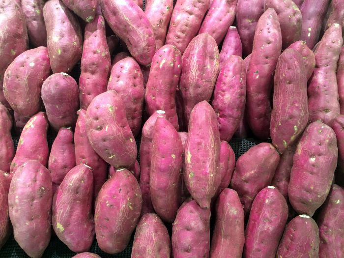 sweet potoatoes for dogs