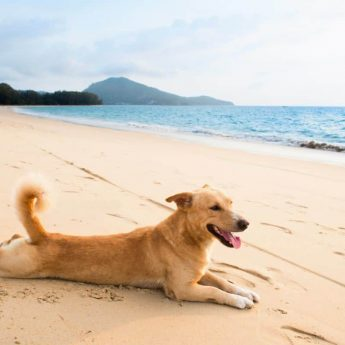 Good Dogs for Warm Climates