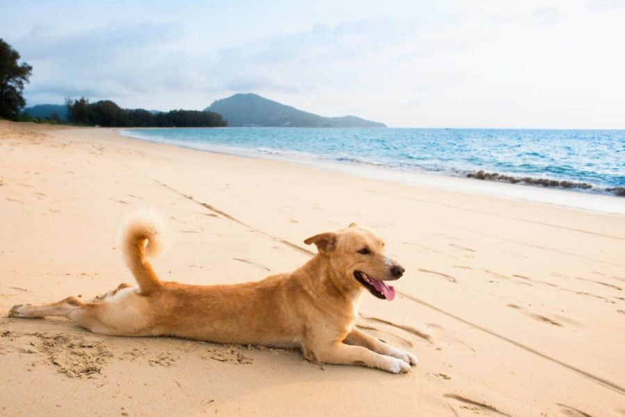 10 Best Dog Breeds For Hot Weather Heat Friendly Canines