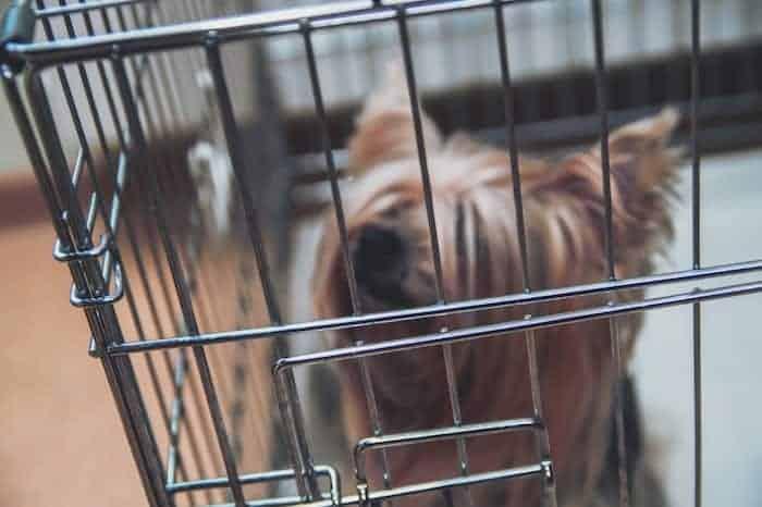 wire-puppy-crate