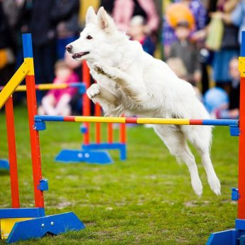 Agility Course Obstacles