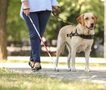 Best Service Dog Breeds