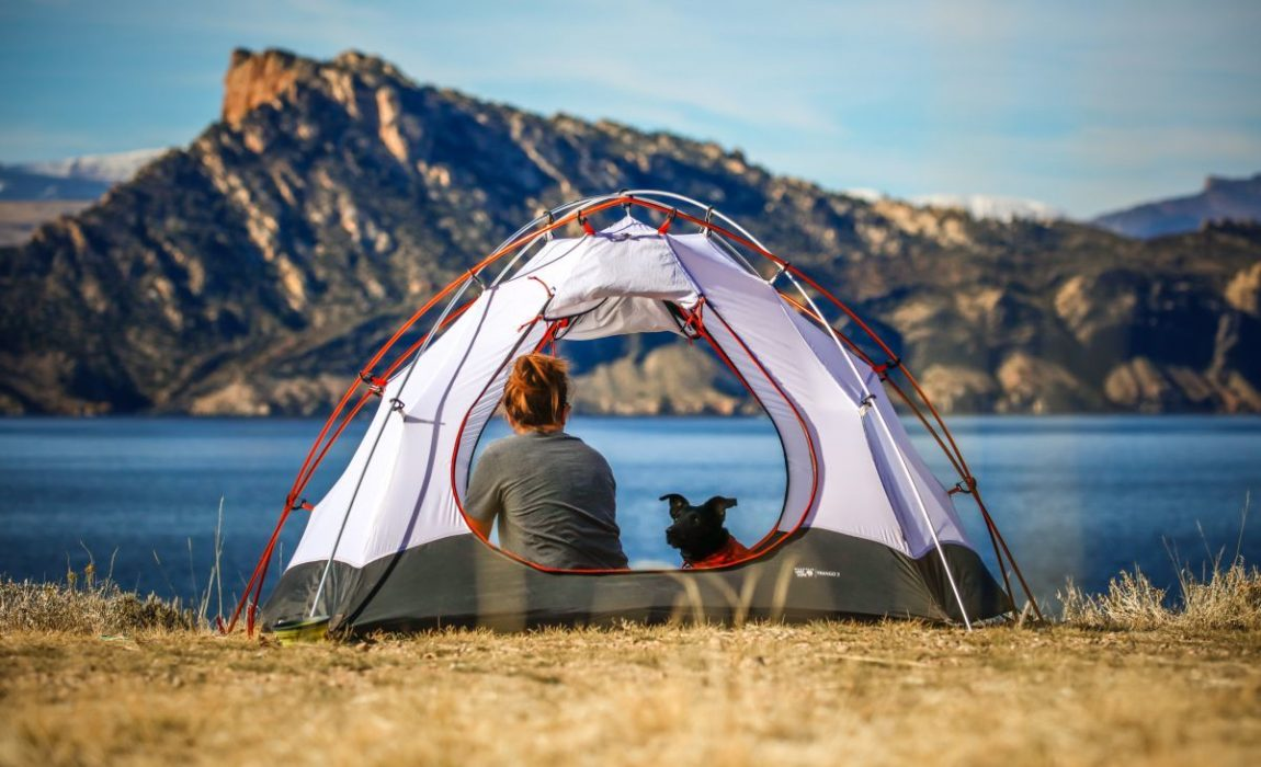 Best Tents for Dogs