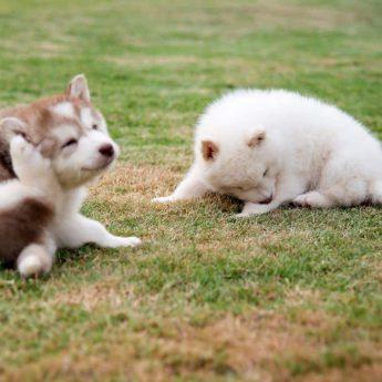 Dandruff in Dogs