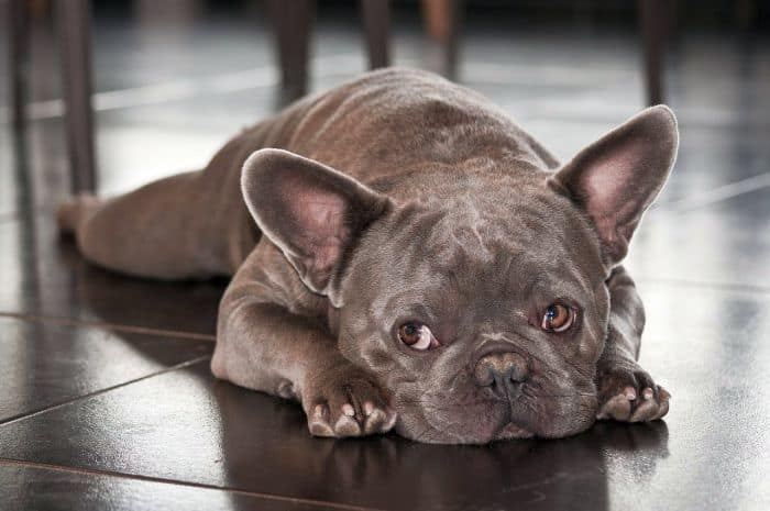 Dog Breeds That Are Profitable
