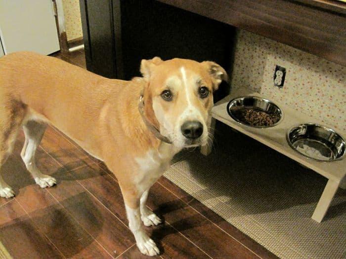 Dog Feeder Dish