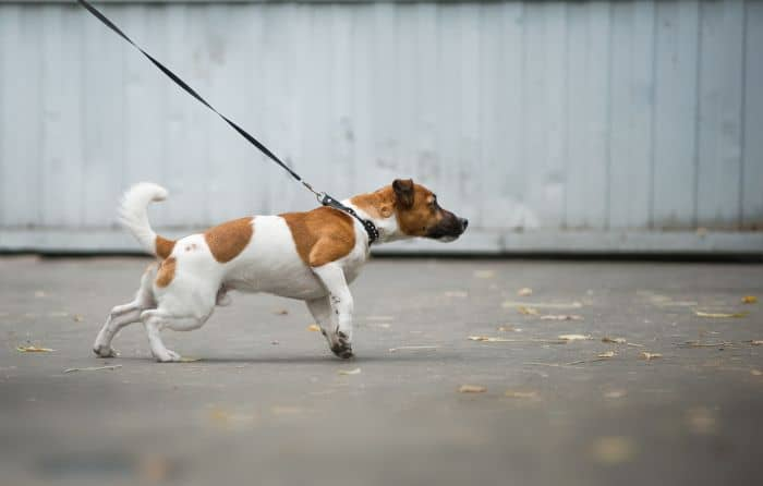 Dog Leash for Pullers
